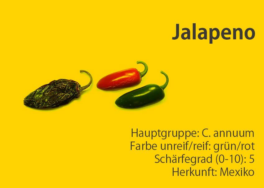 Jalapeno </br> Chili-Sorte