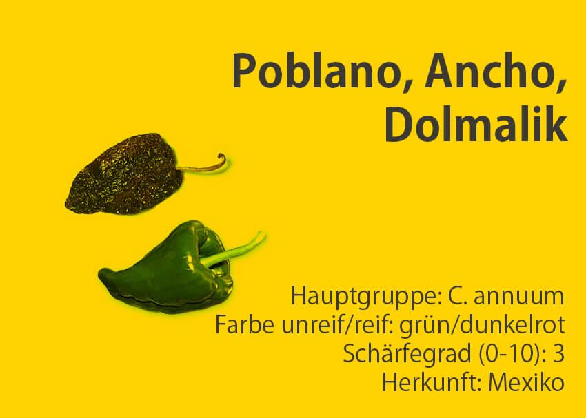 Poblano, Ancho, Dolmalik </br> Chili-Sorte