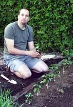 Im Chili Anbau werden die Pflanzen nach einer gewissen Zeit ins Freiland umgepflanzt.