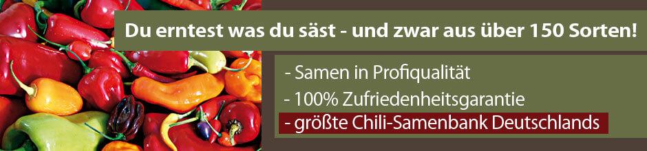 Chili Samen in Profiqualität kaufen!
