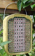 Spezielle Nistkästen helfen, im Garten Nutz- Insekten wie die Schlupf-Wespe anzusiedeln und somit den Chili Anbau zu erleichtern.