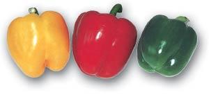 Gemüsepaprika, auch eine </br> Chili-Sorte