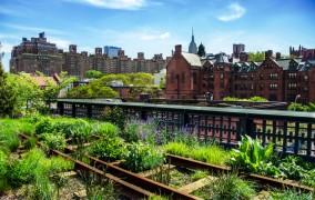 Urban Gardening - die umfassende Übersicht