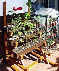 Chilis Platzsparend Anbauen Fur Balkon Und Terasse Pepperworld