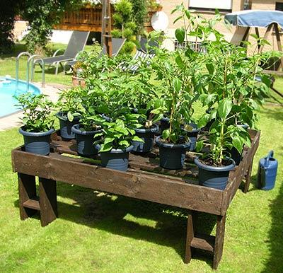 """""""Hochbeet"""" für die Chili-Pflanzen"""