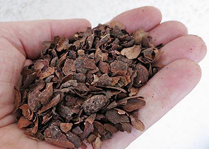 Kakao-Mulch
