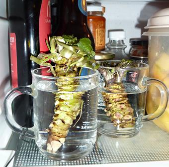 Wasabi-Aufbewahrung im Kühlschrank