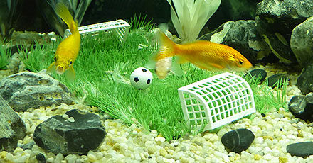 Fischfußball!