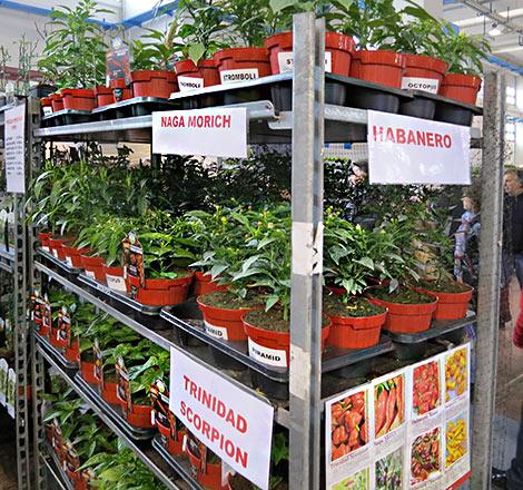 Chilipflanzen auf einer Verbrauchermesse