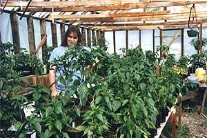 Dena in ihrem Pepper-Gewächshaus