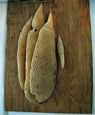 Killerbienenwaben in einer Holzwand