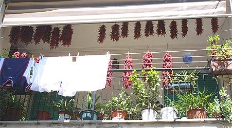 Chili-Balkon 25