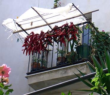 Chili-Balkon 19