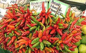 Scharfe italienische Chilis