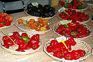 Chili-Auswahl