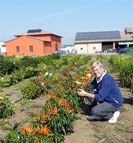 Harald inspiziert neue Chili-Sorten