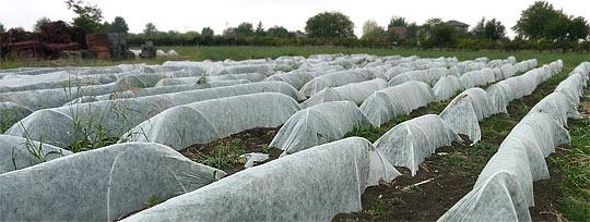 Sortenreine Saatvermehrung