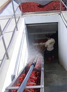 Chili-Wäsche