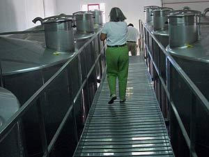 Tanks zur Aufnahme der gehäckselten Schoten