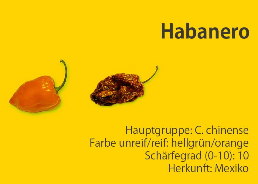Habanero </br> Chili-Sorte