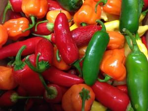 Chili Geschichte: Diese bunte Vielfalt an Chili-Früchten hätten wir ohne Columbus womöglich verpasst