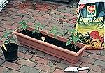 Auch im Chili Anbau können mehrere Pflanzen in ein Gefäß gesetzt werden.