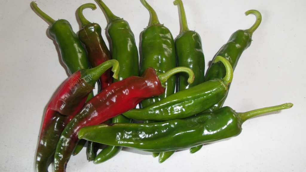 New Mexico Chili - 50 Mio. USD Umsatz...
