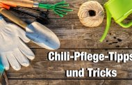 Chili Pflanzen Pflege</br> (Crash-Kurs für Chili-Gärtner Teil 3)