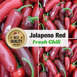 Frische Chili Jalapeno rot, 400g