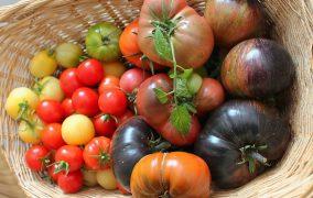 Tomaten – selber anpflanzen – der Crashkurs
